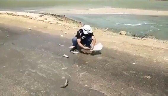 تلف شدن دسته جمعی ماهی ها در شیف!