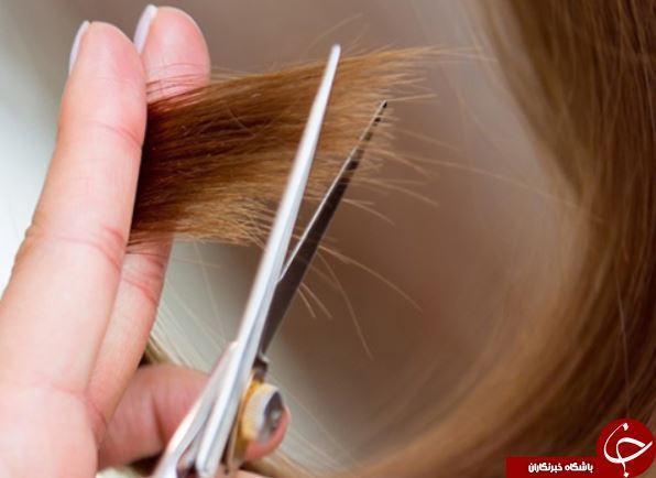 درمان موخوره با چند ترفند خانگی، فرمول هایی طبیعی که موهایتان را نرم و زیبا می کنند