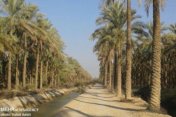 اقتصاد نخلفقط فروش خرما نیست، ورود گردشگر به نخلستان های بوشهر