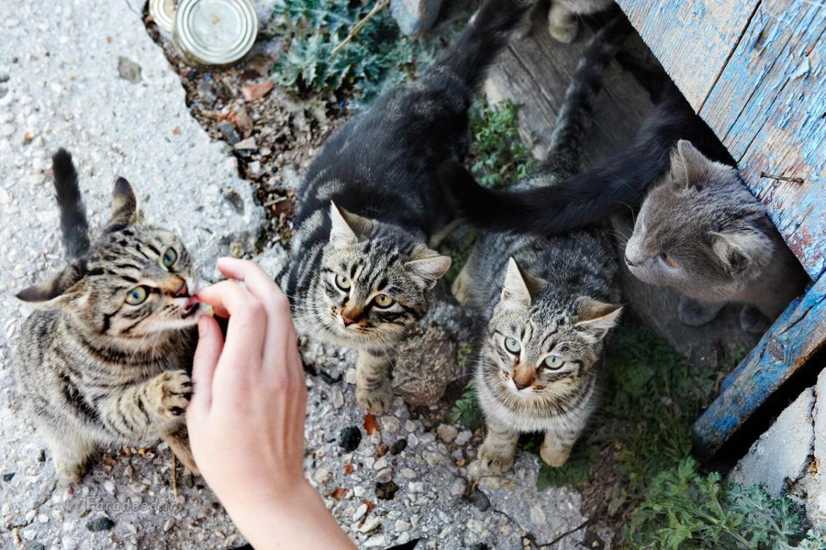 چگونه باید با گربه های خیابانی و حیوانات شهری برخورد کنیم؟