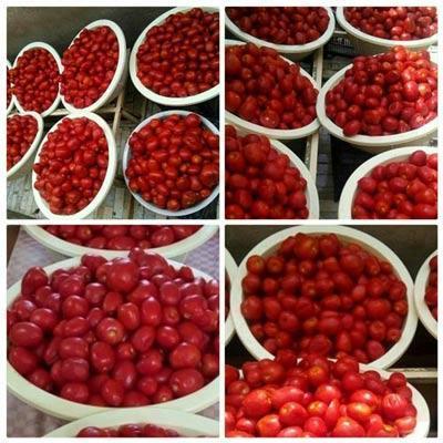 طرز تهیه رب گوجه خانگی
