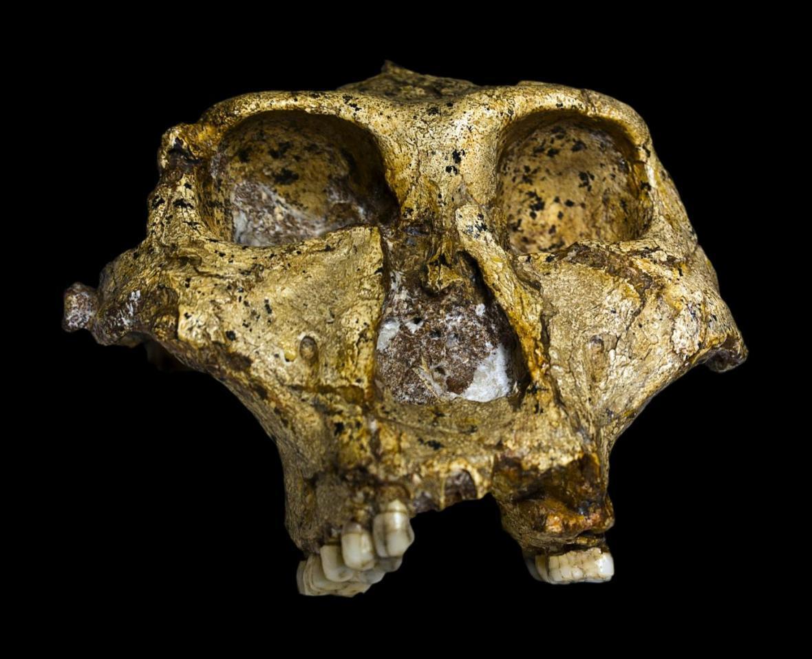 اجداد دو میلیون ساله انسان در آفریقا