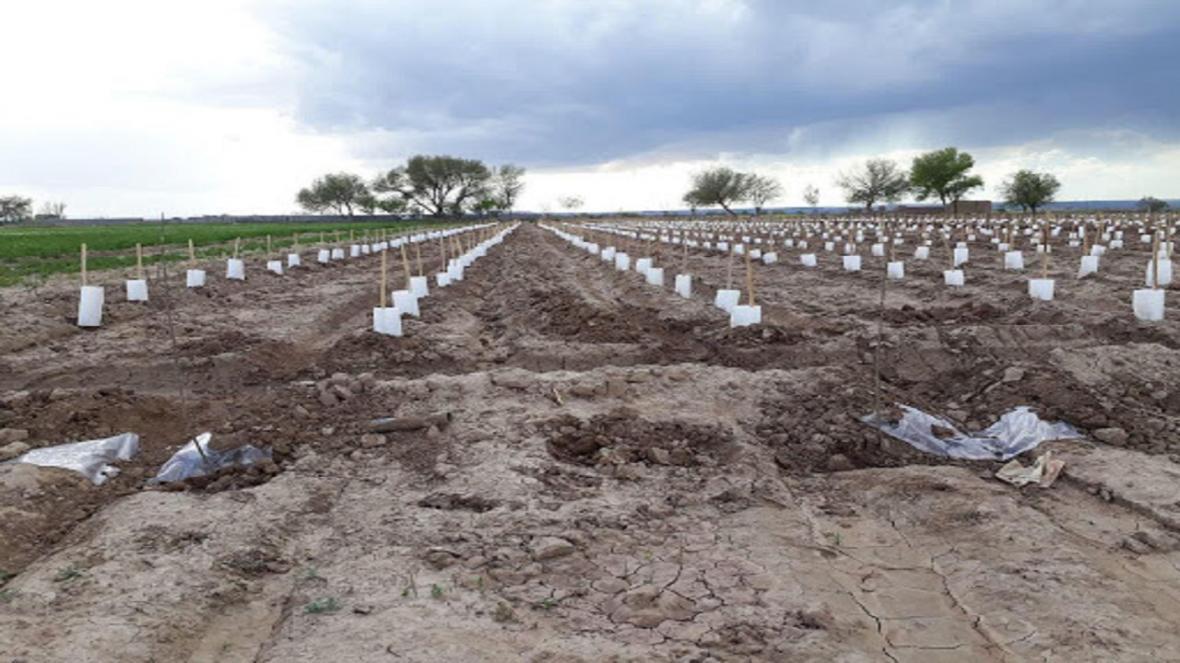 راه اندازی 12 سایت تحقیقاتی-آموزشی کشاورزی در قزوین