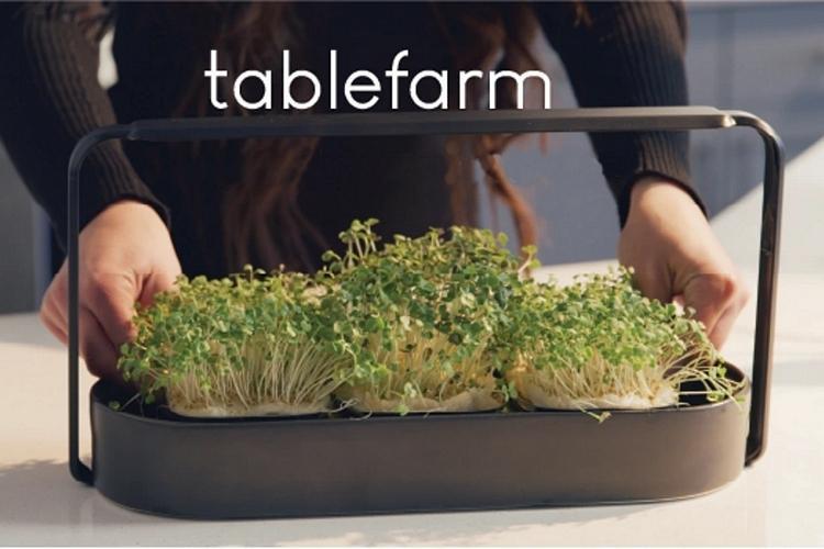 آشپزخانه تان را به مزرعه هوشمند تبدیل کنید